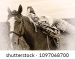 blonde and white horse on... | Shutterstock . vector #1097068700