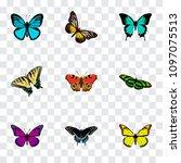 set of moth realistic symbols...   Shutterstock .eps vector #1097075513