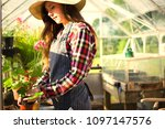 woman gardening in a greenhouse | Shutterstock . vector #1097147576