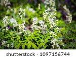 wild flower meadow in spring day | Shutterstock . vector #1097156744