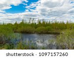 landscape with small lake in bog | Shutterstock . vector #1097157260