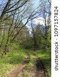 dirt road in spring green forest | Shutterstock . vector #1097157824