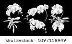 set of isolated white... | Shutterstock .eps vector #1097158949