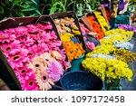 gerber daises on the market ... | Shutterstock . vector #1097172458