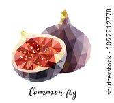 vector illustration of common... | Shutterstock .eps vector #1097212778