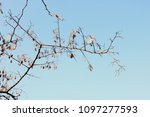 low angle view of branches... | Shutterstock . vector #1097277593