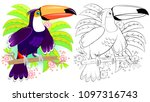 colorful and black and white... | Shutterstock .eps vector #1097316743