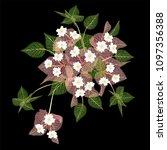 bougainvillea  flower isolated... | Shutterstock .eps vector #1097356388