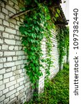 old white brick wall with green ... | Shutterstock . vector #1097382440