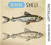 small  typical smelt or... | Shutterstock .eps vector #1097392286