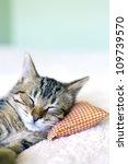 Stock photo small cat 109739570
