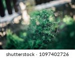 the spider web  | Shutterstock . vector #1097402726