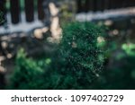 the spider web  | Shutterstock . vector #1097402729