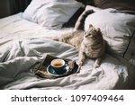 adorable fluffy little scottish ... | Shutterstock . vector #1097409464