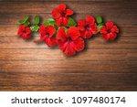 red hibiscus flower on caulked...   Shutterstock . vector #1097480174
