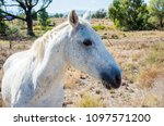 Profile Of White Speckled Hors...