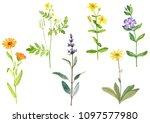 watercolor drawing medicinal...   Shutterstock . vector #1097577980