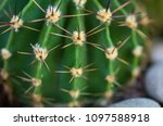 spiky with protruding spikes... | Shutterstock . vector #1097588918