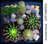 somewhat prickly with... | Shutterstock . vector #1097588924