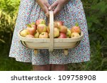 woman wearing a dress with a trug of fresh apples - stock photo