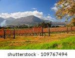 franschhoek wineland area ... | Shutterstock . vector #109767494