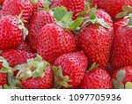 heap of red ripe strawberry | Shutterstock . vector #1097705936