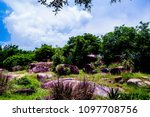 a small forest with rocks on a... | Shutterstock . vector #1097708756