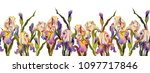 seamless border with irises... | Shutterstock . vector #1097717846