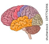 vector illustration of human...   Shutterstock .eps vector #1097742446