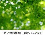 spring background  green leaves ... | Shutterstock . vector #1097761496