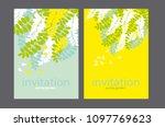 acacia spring blossom flower... | Shutterstock .eps vector #1097769623