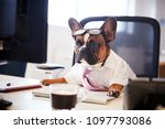 Stock photo french bulldog dressed as businessman works at desk on computer 1097793086