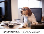 beagle dressed as businessman... | Shutterstock . vector #1097793134