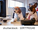 Stock photo bulldog and beagle dressed as businessmen at desk with computer 1097793140