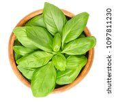 fresh green basil leaves in... | Shutterstock . vector #1097811230