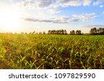 cornfield at sunset on... | Shutterstock . vector #1097829590
