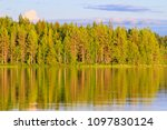 coniferous forest in the... | Shutterstock . vector #1097830124