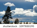 silhouettes of pine trees and... | Shutterstock . vector #1097830190