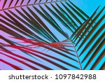 tropical and palm leaves in... | Shutterstock . vector #1097842988