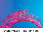 tropical and palm leaves in... | Shutterstock . vector #1097845583