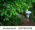 green forest leaves in tropical ... | Shutterstock . vector #1097892248