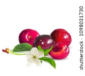 fresh  nutritious and tasty... | Shutterstock .eps vector #1098031730