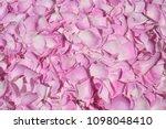 Stock photo pink rose petals 1098048410
