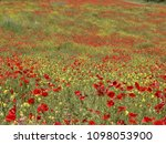 Field With Red And Yellow...