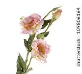 Stock photo pink lisiantus eustoma flower isolated on white 109806164
