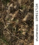 Small photo of Wool on the grass. Moult of an animal