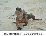 a closeup of an iguana on allen'... | Shutterstock . vector #1098149588