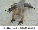 a closeup of an iguana on allen'... | Shutterstock . vector #1098152624