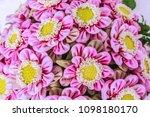 beautiful lotus flower | Shutterstock . vector #1098180170