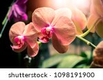 orchid flower garden   Shutterstock . vector #1098191900